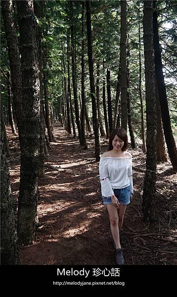 47九天森林.jpg