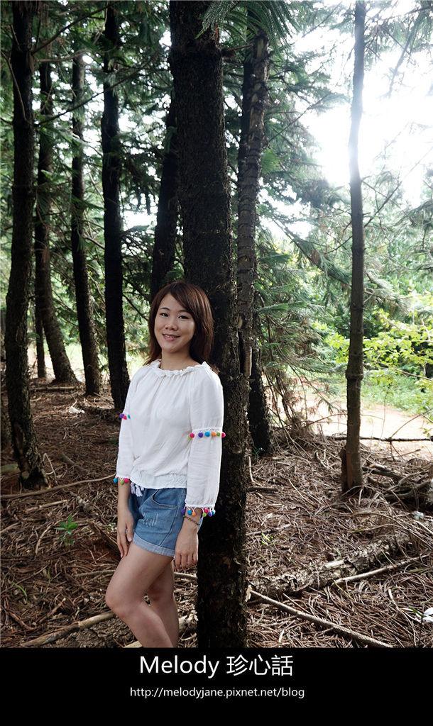 48九天森林.jpg