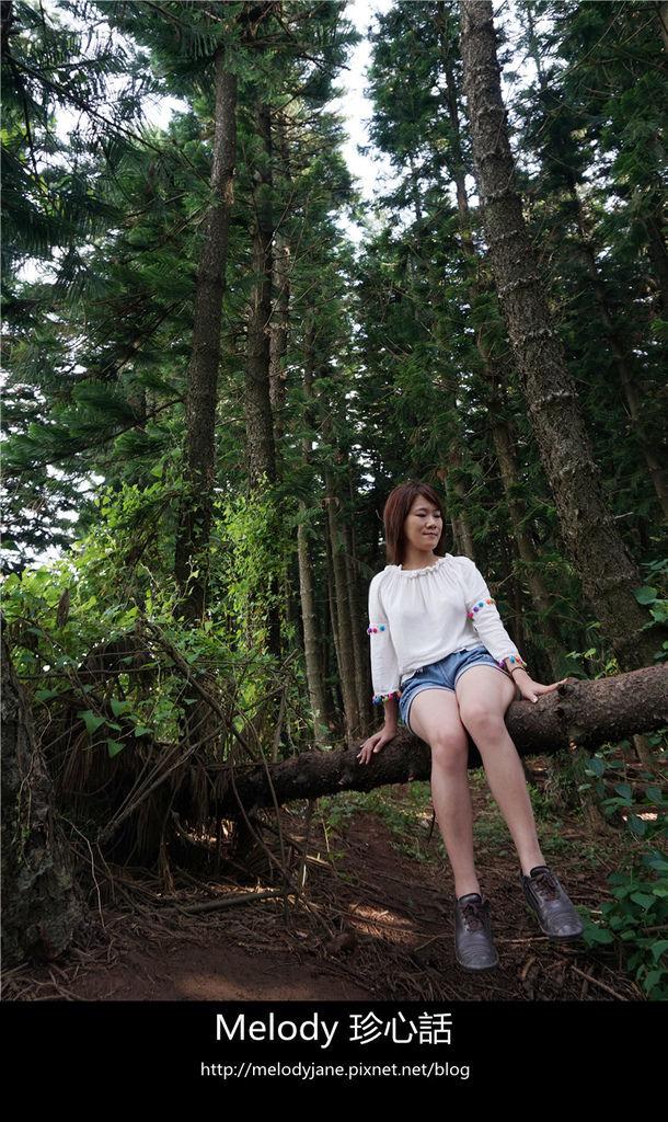 49九天森林.jpg
