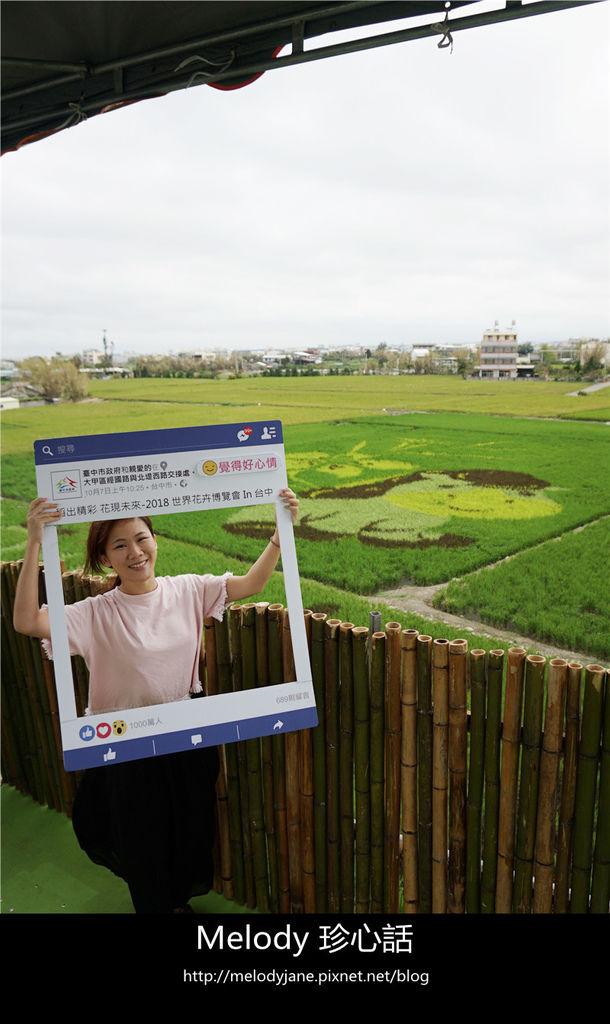 96大甲小馬彩繪稻田.jpg
