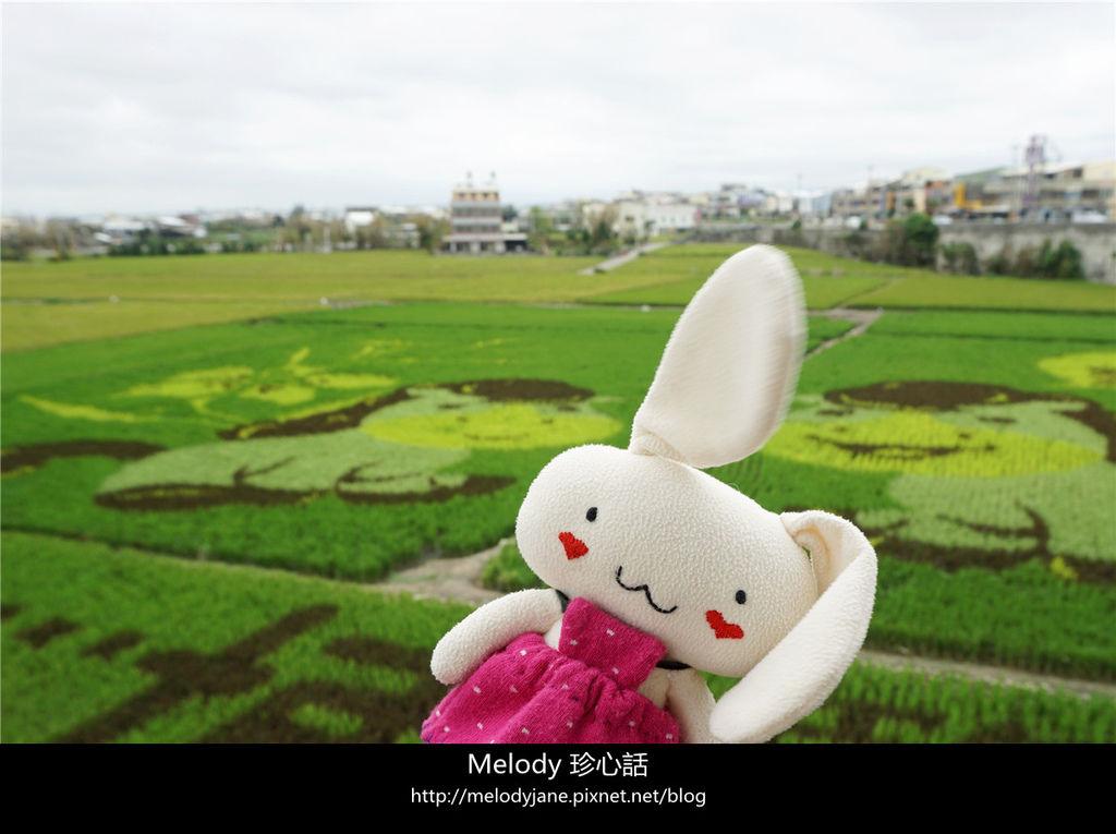 97大甲小馬彩繪稻田.jpg