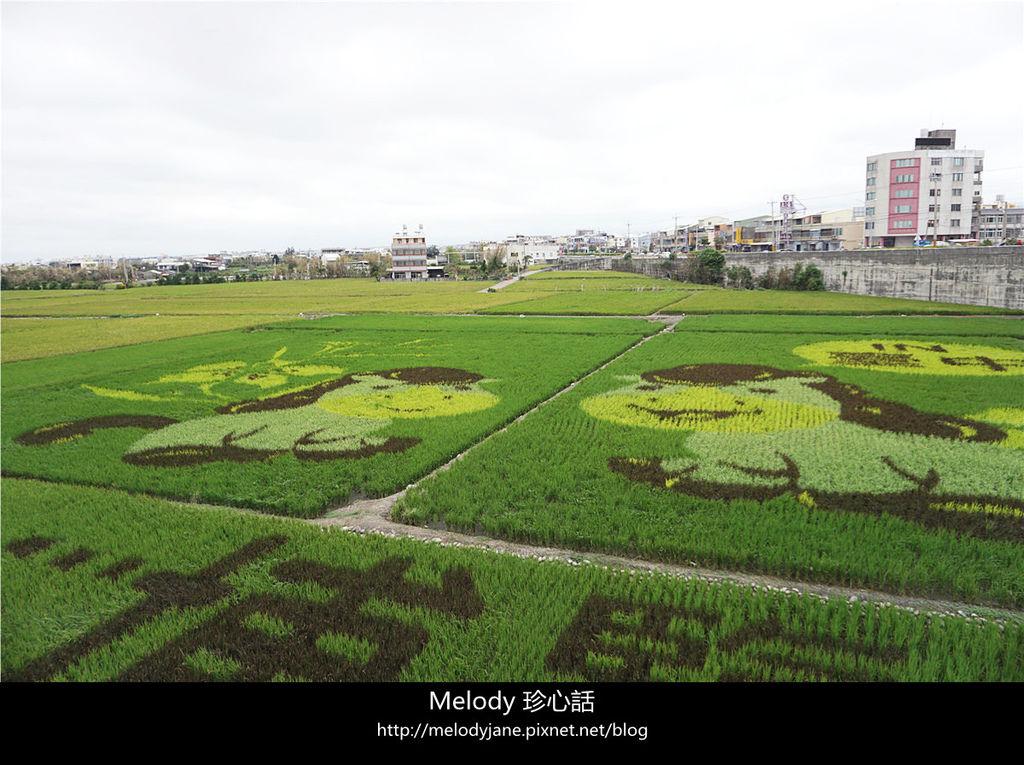 98大甲小馬彩繪稻田.jpg