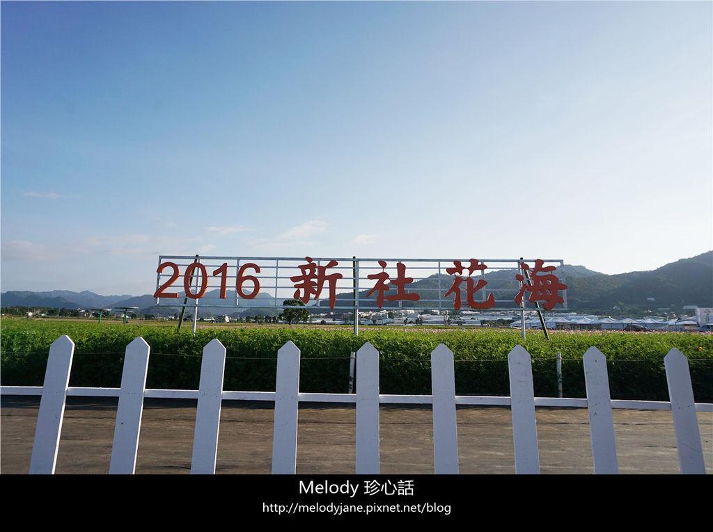 310新社花海.jpg
