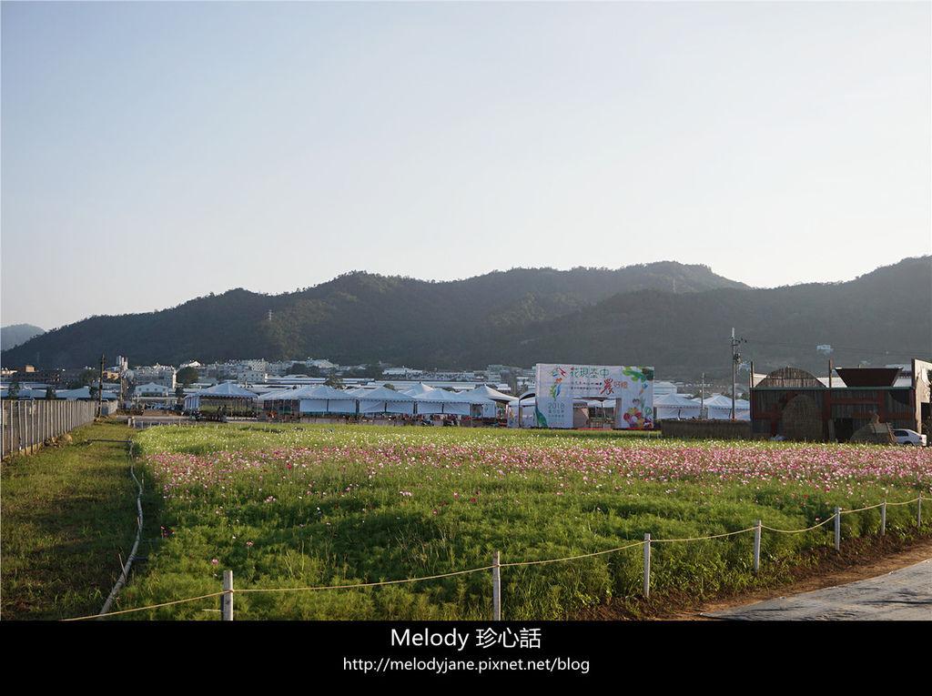 315新社花海.jpg