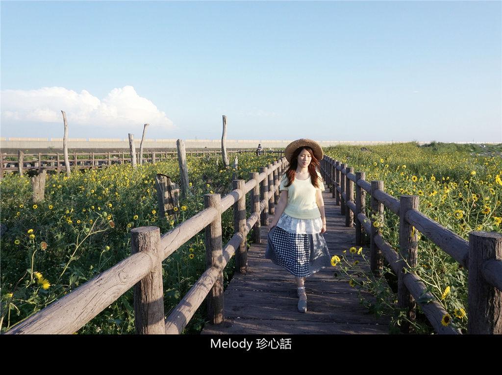 306 2福寶濕地 紫斑向日葵花海.jpg