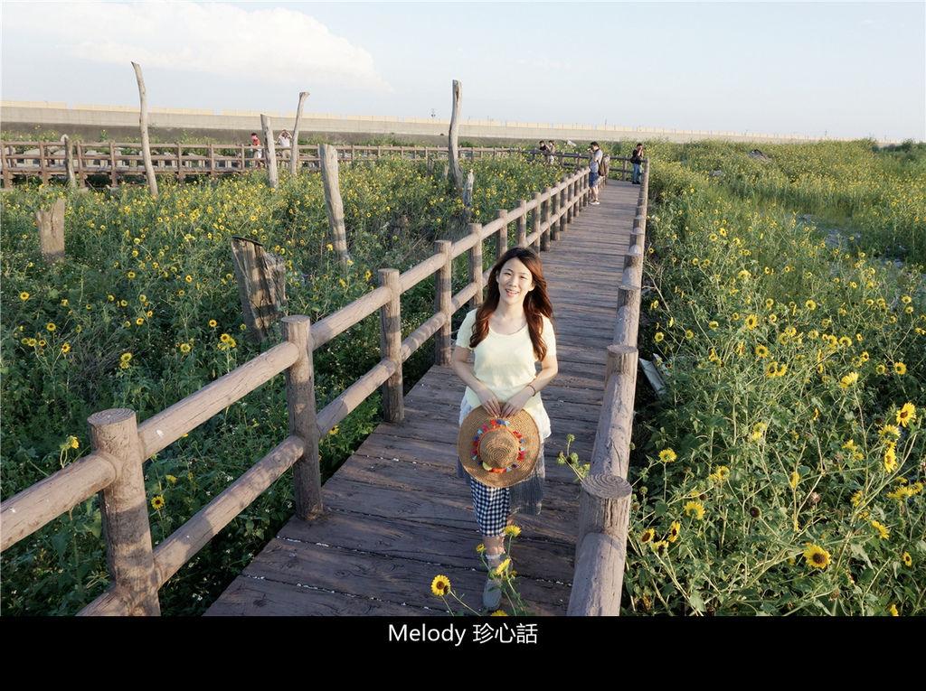 308福寶濕地 紫斑向日葵花海.jpg