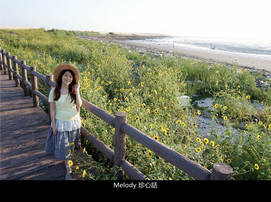 3010福寶濕地 紫斑向日葵花海.jpg