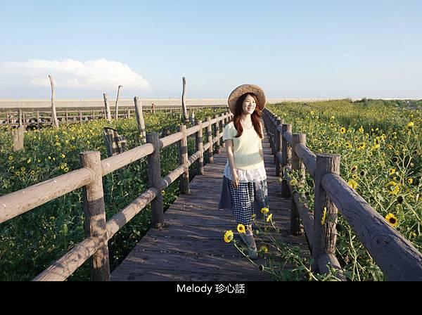 307福寶濕地 紫斑向日葵花海.jpg