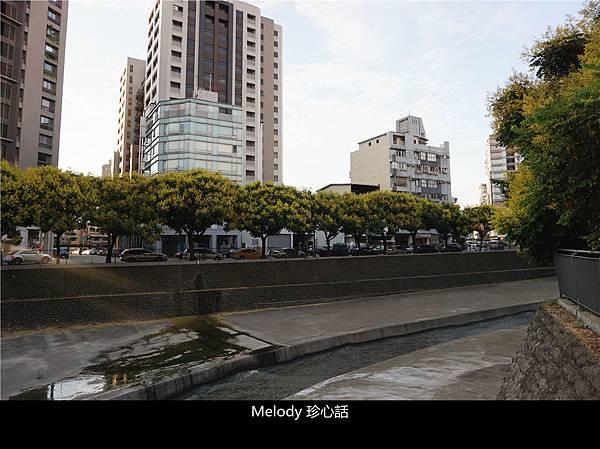 2112 台中 臺灣欒樹.jpg