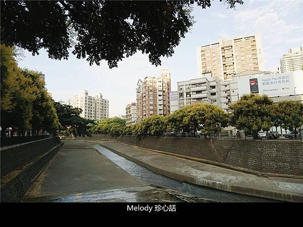2110 台中 臺灣欒樹.jpg
