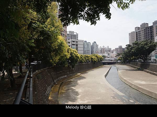 2111 台中 臺灣欒樹.jpg