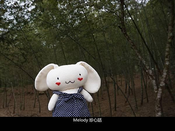 53 南投鹿谷景點 武岫竹炭窯.jpg