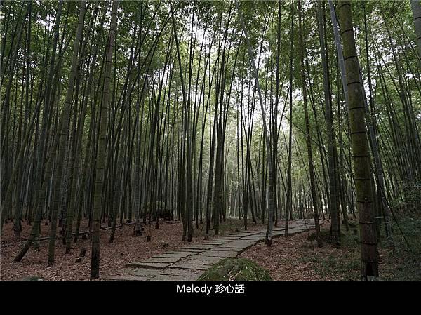 516 南投鹿谷景點 孟宗竹林古戰場步道.jpg