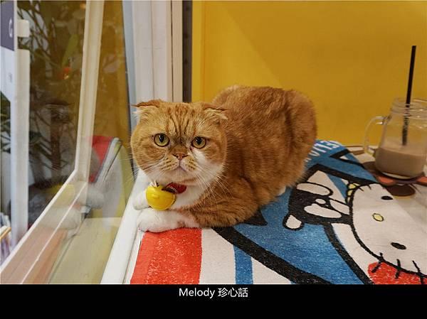256 台中貓餐廳 Mr. Cookie 貓.jpg