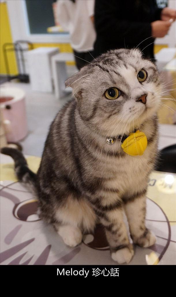 255 台中寵物餐廳 Mr. Cookie 貓.jpg