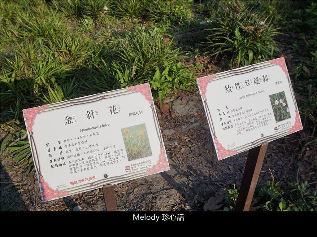 135 臺中港金針花海.jpg