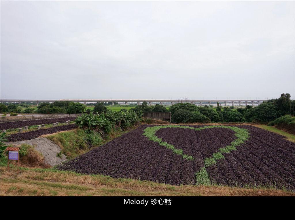 164 紫色地瓜葉愛心彩繪田.jpg