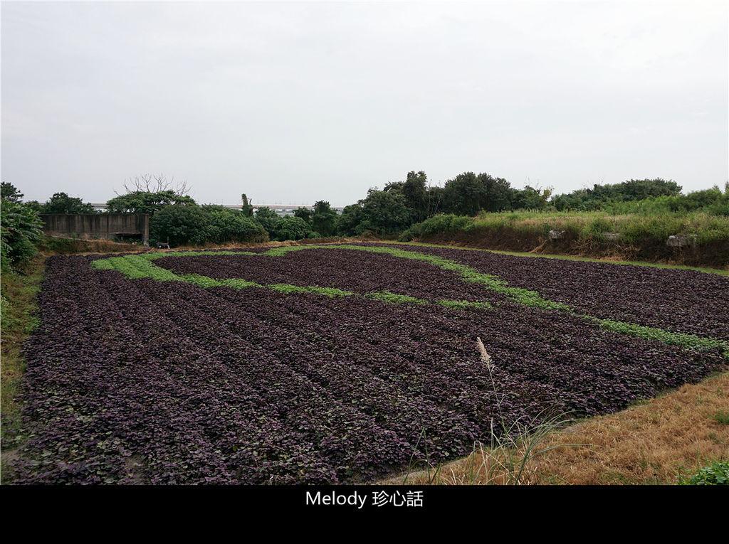 168 愛心彩繪田.jpg