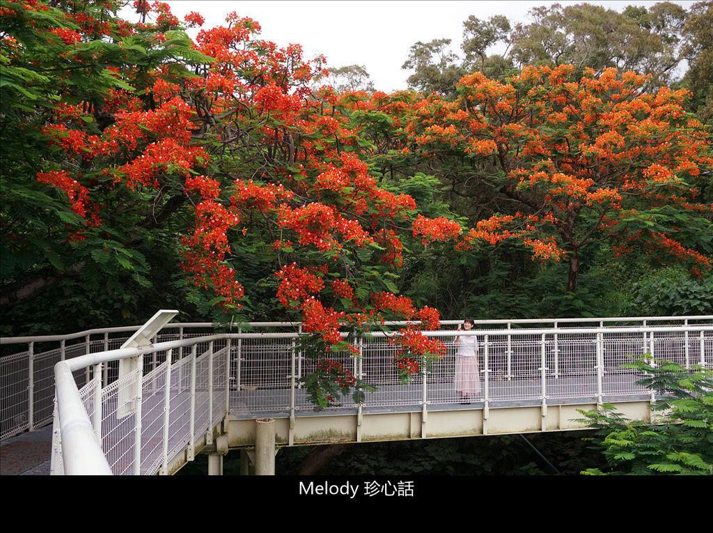 261 彰化景點 八卦山.jpg