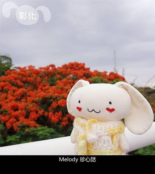 2610 彰化鳳凰花.jpg