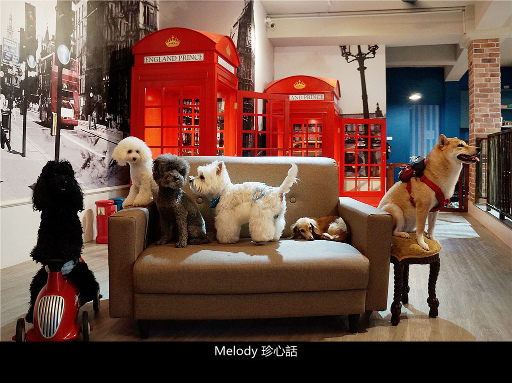 241 英倫王子悠閒時光寵物旅館.jpg