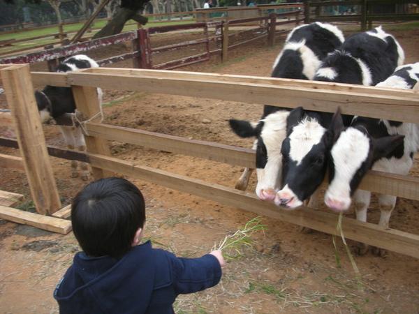 牛牛爭先恐後