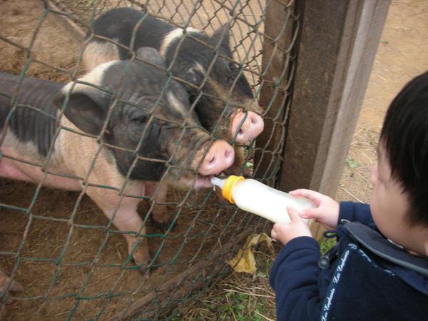 還可以餵豬