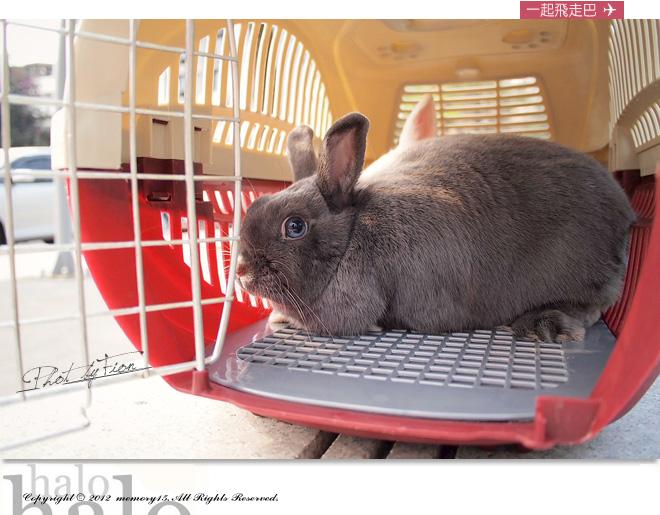 小兔子大明星 (1)