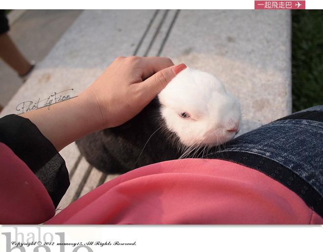 小兔子大明星 (3)