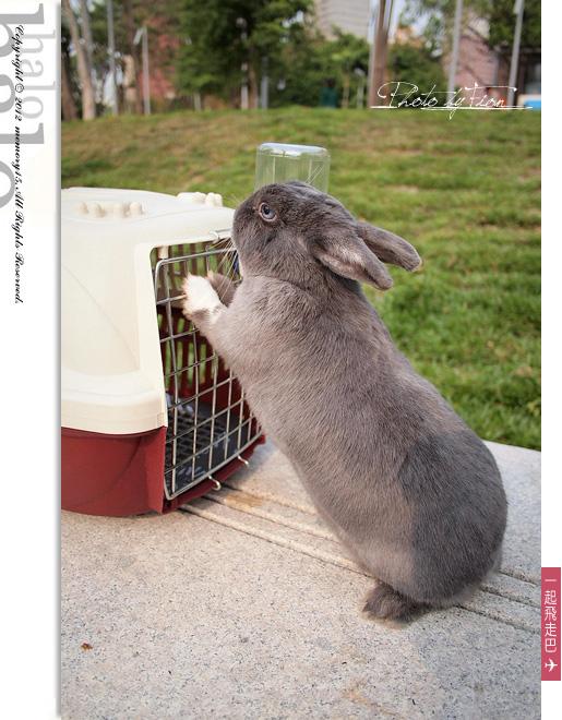 小兔子大明星 (6)