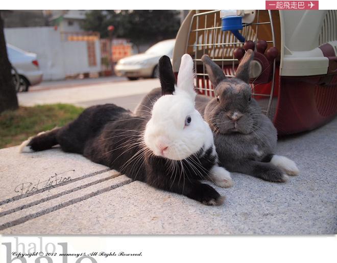 小兔子大明星 (12)