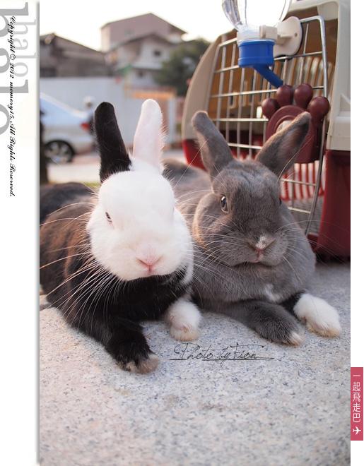 小兔子大明星 (13)