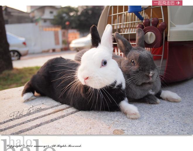 小兔子大明星 (14)