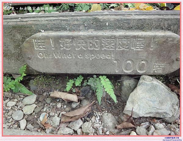 知本國家森林遊樂區-13
