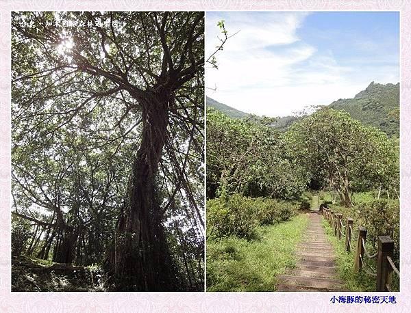 知本國家森林遊樂區-15