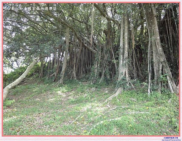 知本國家森林遊樂區-17