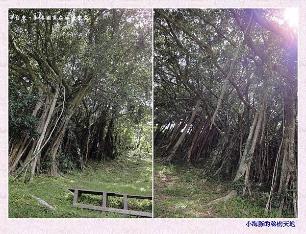 知本國家森林遊樂區-18