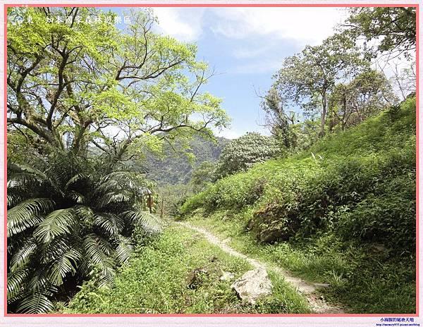 知本國家森林遊樂區-19