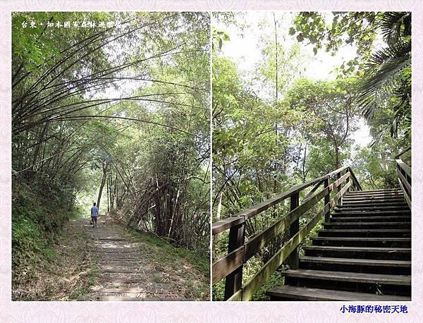 知本國家森林遊樂區-22
