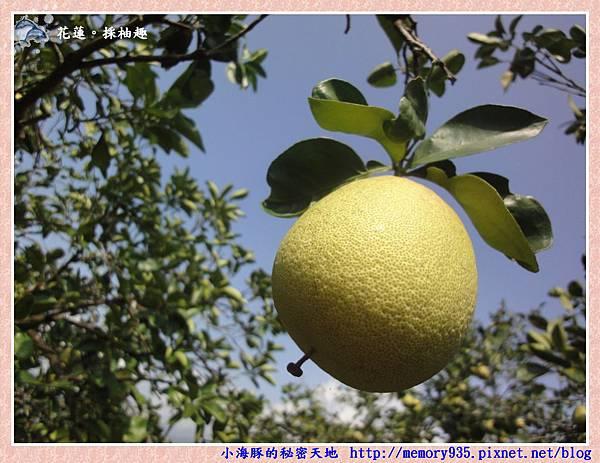 鶴岡採柚趣