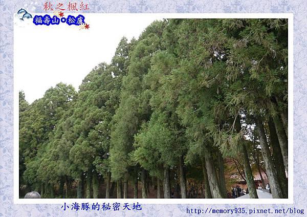 和平區~福壽山農場13