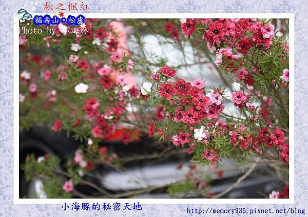和平區~福壽山農場14
