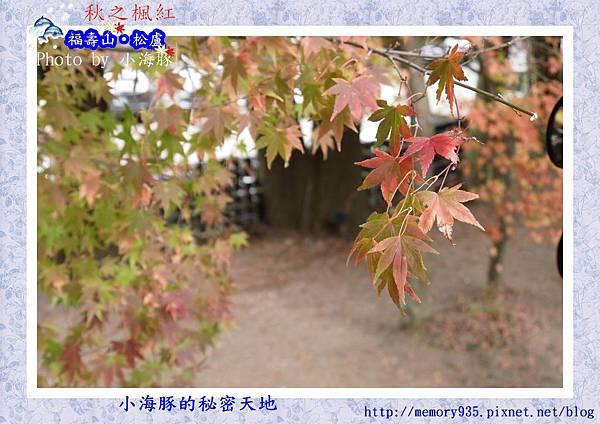 和平區~福壽山農場17
