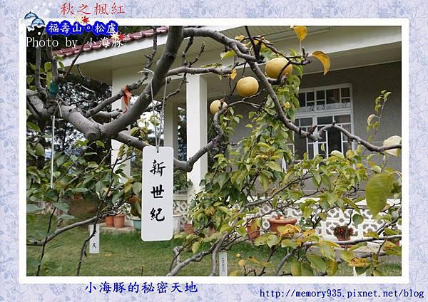 和平區~福壽山農場21