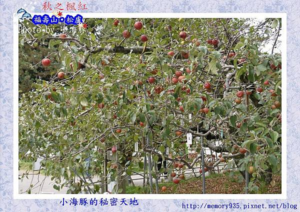 和平區~福壽山農場23