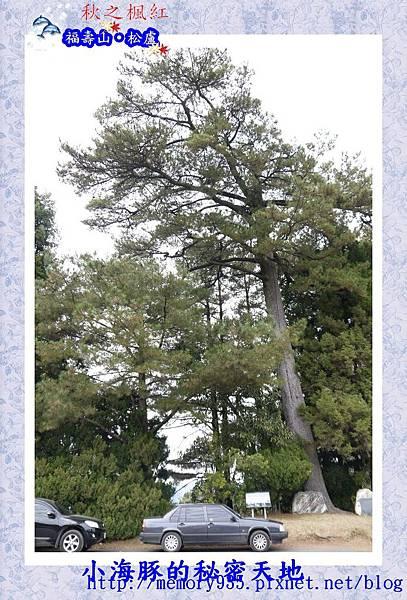 和平區~福壽山農場24