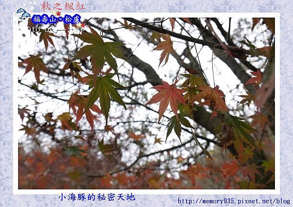 和平區~福壽山農場26