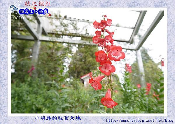 和平區~福壽山農場27