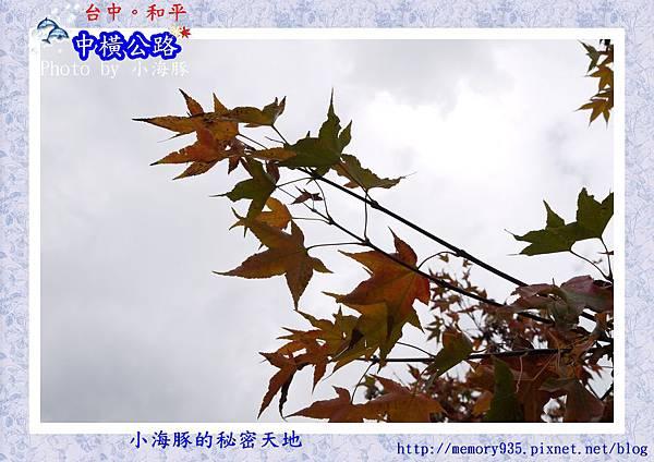 和平區~梨山遊憩區01