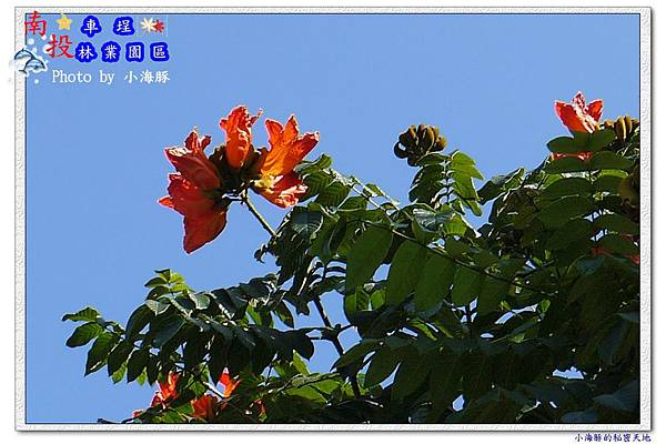 水里鄉~車埕木業園區07